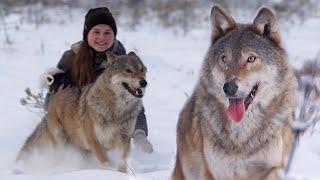 Девушка и волки | Film Studio Aves