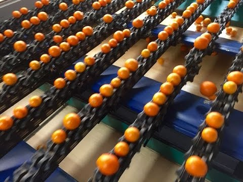 Visual Tour of a Packinghouse for Oranges