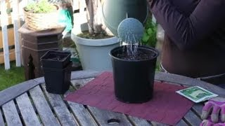 How to Plant Dill Seed : Seed Planting Tips