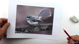 How To Draw A Realistic Bird With Pencil Step By Step 2016 - Drawing For Kids
