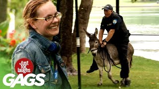 Cop Chases After Criminal With Donkey