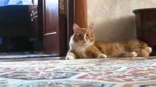 кот встал и пошел)