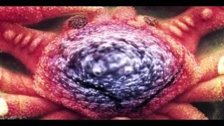 Ween - Mutilated Lips (Music Video)