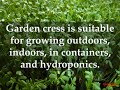 HOW TO GROW GARDEN CRESS PLANTS