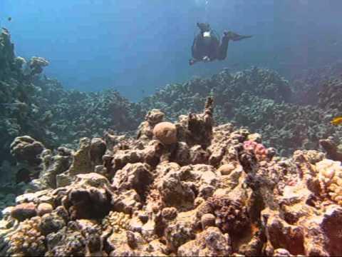 Diving Na