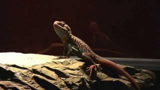 Personality | Reptile Renaissance