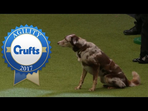 Agility - Large Novice and Medium ABC Final (Part 2) | Crufts 2017
