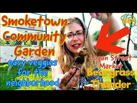 easy veggies grown in Smoketown Community Garden raised bed