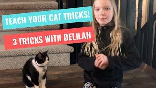 Teach your cat tricks!