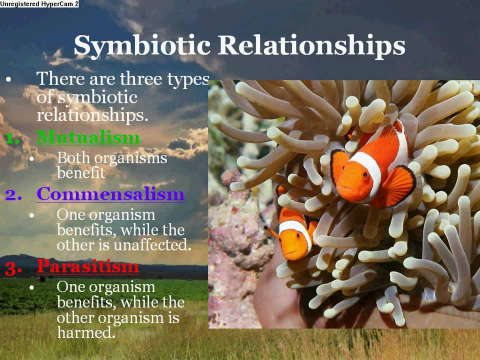 interactions among species