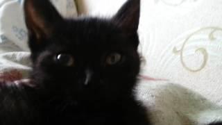 Черный котенок милашка лежит на постели и урчит