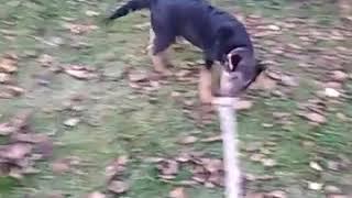 Brutal dog