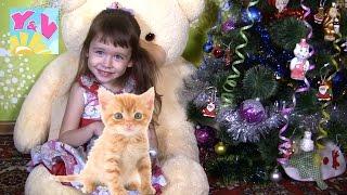 Смешной маленький 🐈 КОТЕНОК 🎁 Подарок на Новый год Волшебство! Мечты сбываются! Смешные котята
