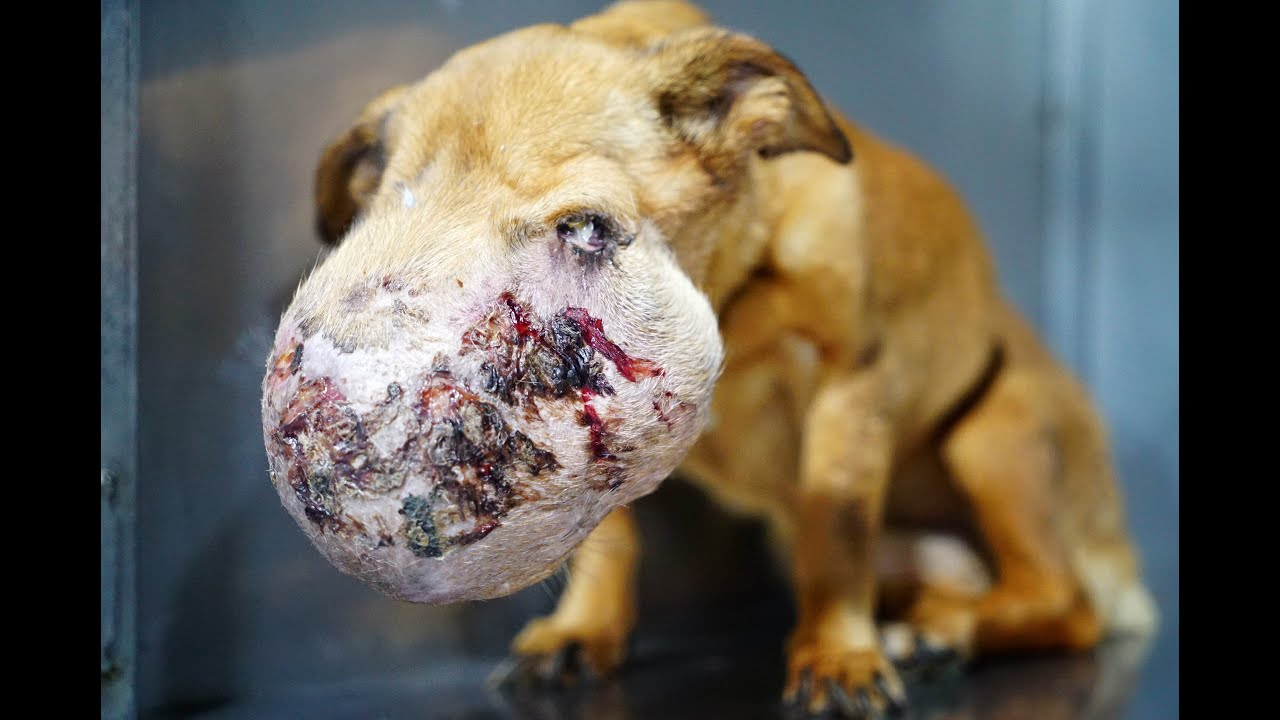 Dog Rescue Youtube Video Larkhill