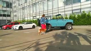 Съёмки в кино / Собака актёр / Шиба ину на съемочной площадке