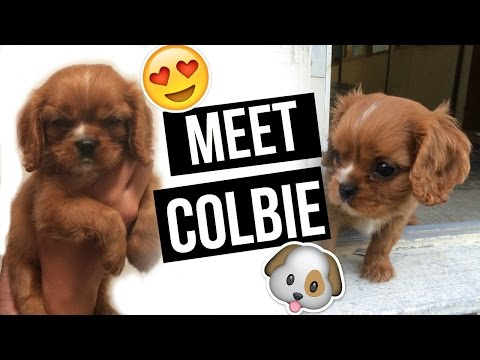 Meet COLBIE! Our Cavalier King Charles Puppy! | ALEX AND MICHAEL