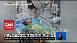 Tubuh Masih hangat, Keluarga Yakini Korban Gigitan Kobra Mati Suri