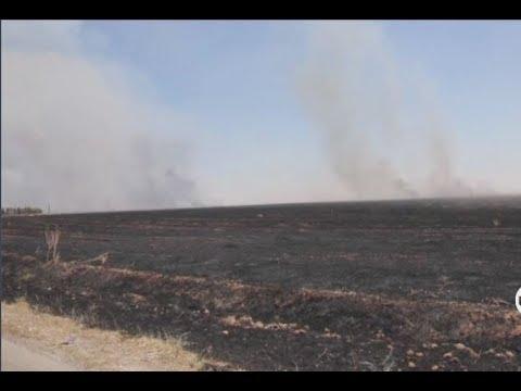 أكثر من 50 ألف هكتار يحترق في الشمال السوري | خاص  - نشر قبل 27 دقيقة