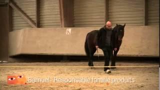 EquiCoaching - Mieux Communiquer grâce aux chevaux