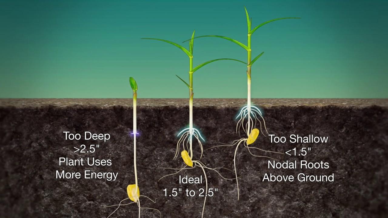 Corn Planting Depth 989 Air Date 3 19 17 You