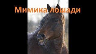 видео Поведение лошадей
