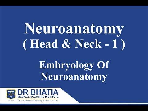 DBMCI- Dr. Ashwani Kumar- Neuroanatomy (Head & Neck-1) Embryology Of Neuroanatomy - AIIMS, PGI, NEET