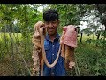 Amazing Cooking Stomach And Intestinal Cow Delicious -Cooking Beef Recipe -Village Food Factory-Food