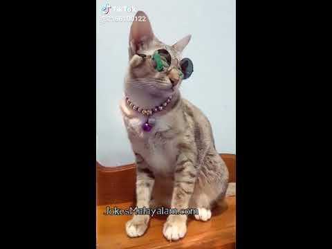 പെണ്പിള്ളേര് കുളിക്കുന്നത് ഒളിഞ്ഞു നോക്കുന്ന അലവലാതി ഷാജി | Best Cat Videos Kitten