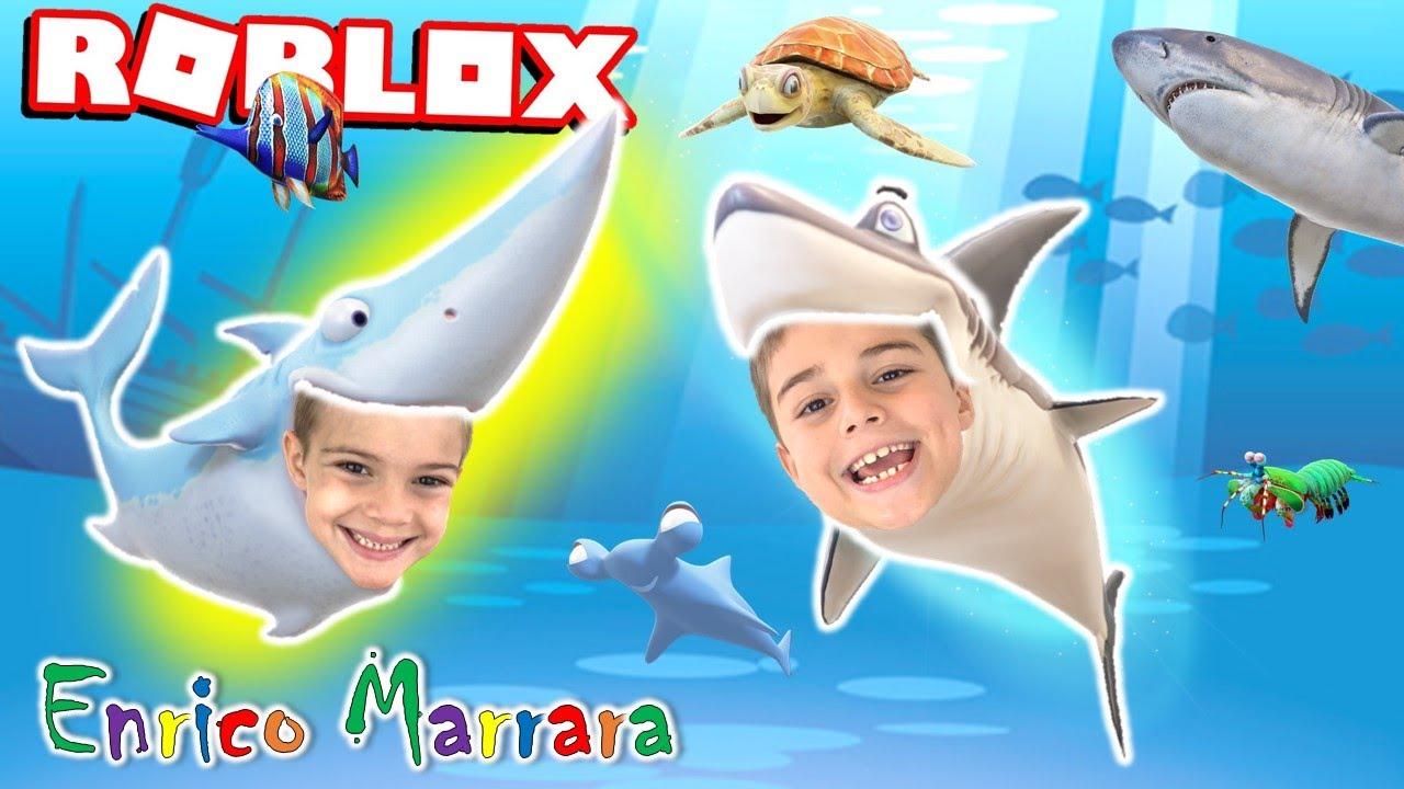 DE TUBARÃO MELANCIA A TUBARÃO MARTELO NO ROBLOX!! (Shark Evolution)