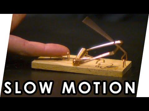 Download Youtube: Den Finger nicht in eine Rattenfalle stecken! | Slow Motion [deutsche Untertitel]