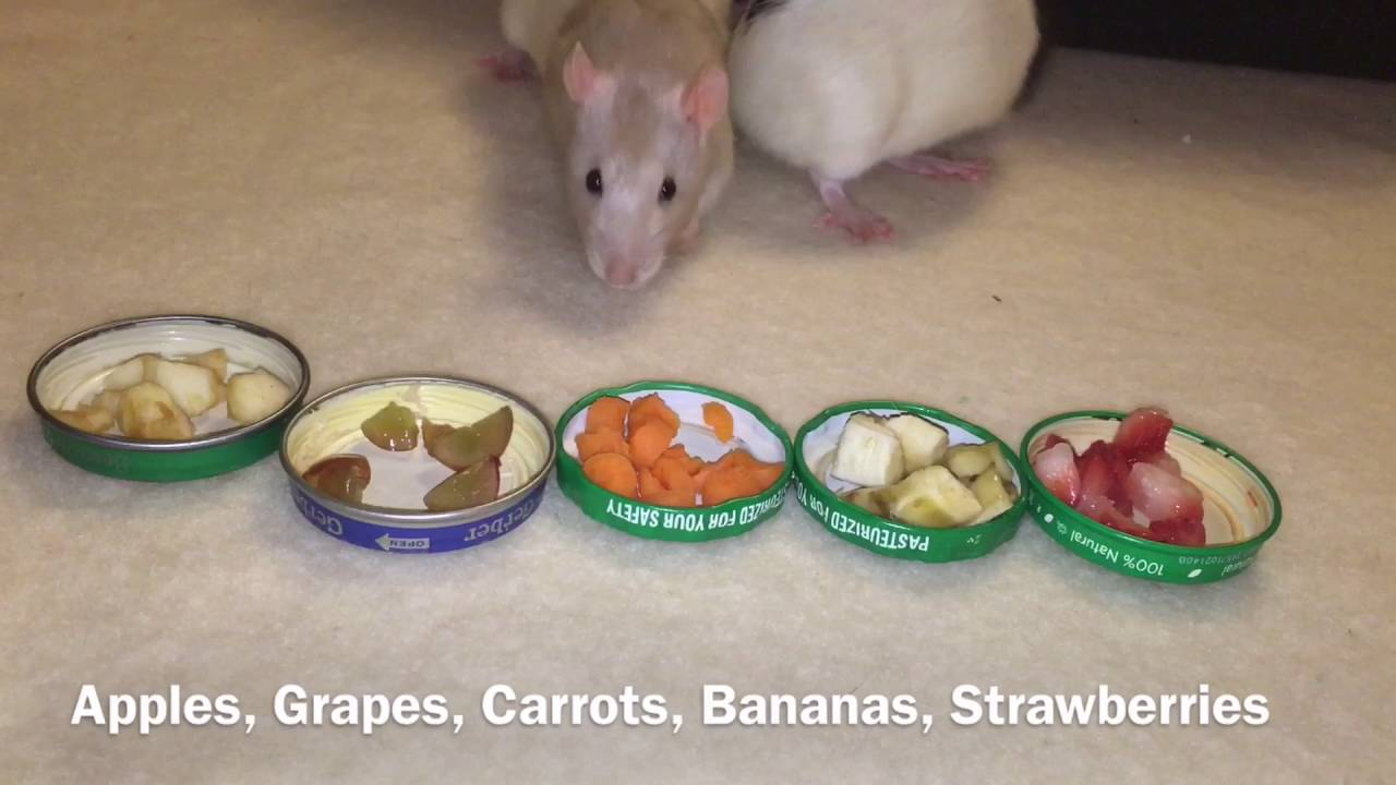 The Treats that I Feed my Rats