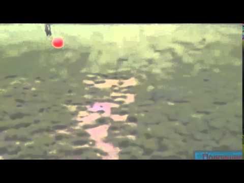 korotkoe-video-smotret-lyuboe-porno-russkie-zrelie