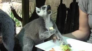 Westpac Brief Animal Encounters at Adelaide Zoo