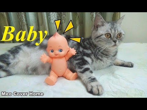 Oops ! My Cat Gave Birth To A Baby ?   Funny Cat Vines 2018   Meo Cover Home