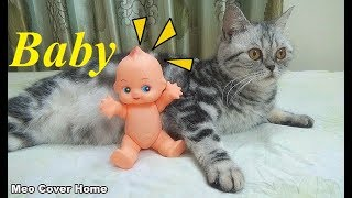 Oops ! My Cat Gave Birth To A Baby ? | Funny Cat Vines 2018 | Meo Cover Home