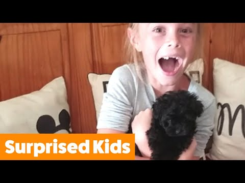 Cutest Puppy Surprise For Kids | Funny Pet Videos