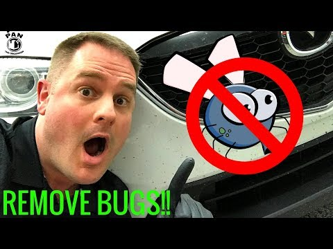 HOW TO REMOVE BUGS FROM A CAR: SUPER EASY !!!