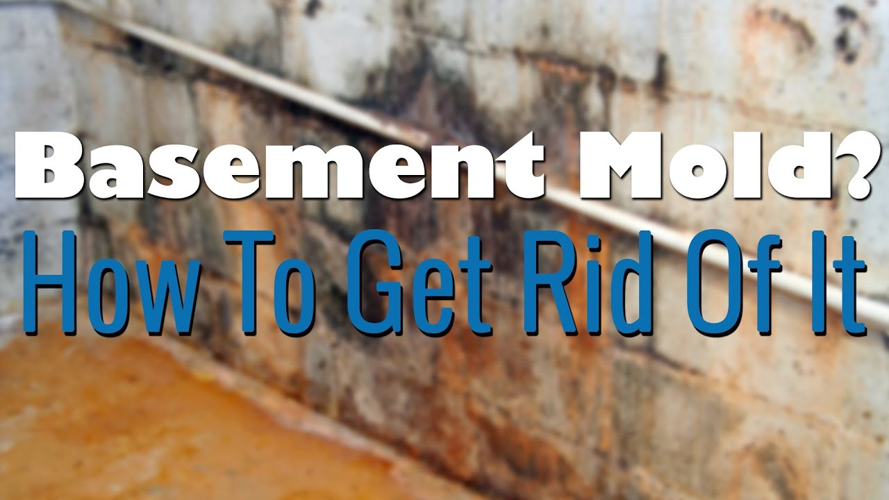 How To Get Rid Of Black Mold On Walls basement mold removal - how to remove mold - youtube