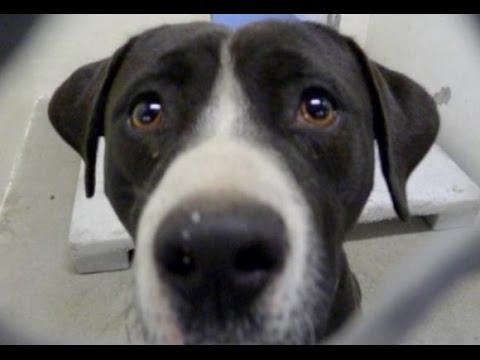 Vida Gamberra - Un perro se vuelve loco cuando se da cuenta que lo adoptaron [Noticias Virales]