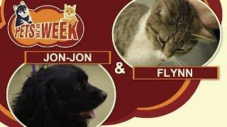 Pets of the Week #4 Jon-Jon & Flynn