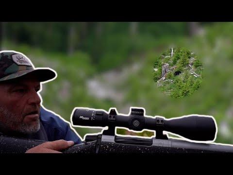 Spring Bear HUNTING in Oregon (Big Black Bear Spotted)