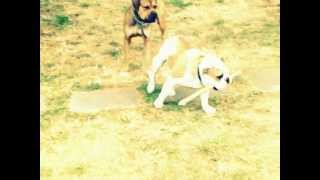 Swatt Dogs K9 Hunter And Blue.