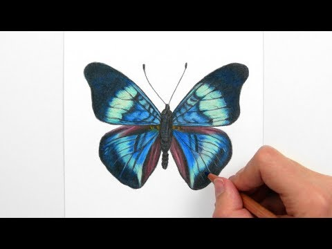 Drawing, Coloring a blue/green Butterfly with colored pencils