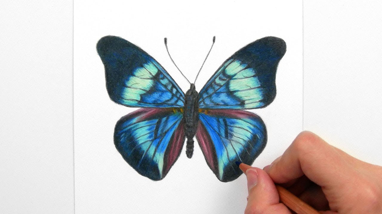 Drawing Coloring A Blue Green Butterfly With Colored Pencils Youtube