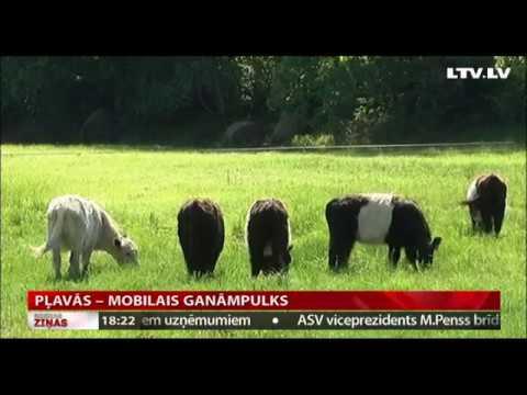 Pļavās – mobilais ganāmpulks