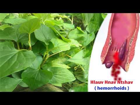 Pov yang qhia tim tshuaj kho mob nyhuv laus | hemorrhoids - Tshuaj ntsuab PY thumbnail