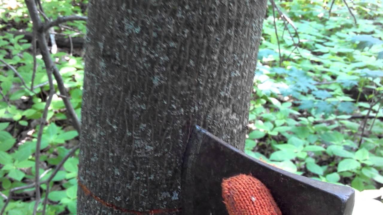 Процесс подготовки древесины при производстве токарных работ - YouTube