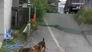 2008-08-10 早朝 クライス君(オレンジ色のカラー)とエリックです。