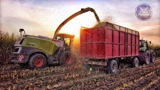 Claas Jaguar 980 10 file - Mais Chopping Biogas Valbona - Agrilavori 2016