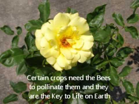 United States honeybees heading for extinction